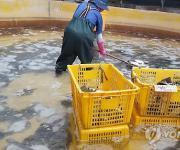 경남도, 양식수산물 재해보험 혜택·지원 한도 확대