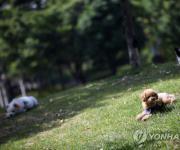 '반려견 이상행동 교정' 등 국가직무능력표준 50개 개발