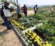 울산시 도시농업사업 추진…도시 텃밭 운영·인력 양성