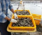 고수온에 양식어류 폐사해도 재해보험금 받는다